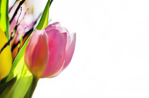 tulp abstract