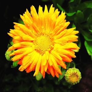Gratis stock foto 39 s rgbstock gratis afbeeldingen for Gerbera in de tuin